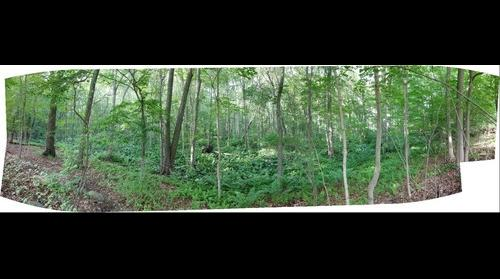 UConn Forest Panorama