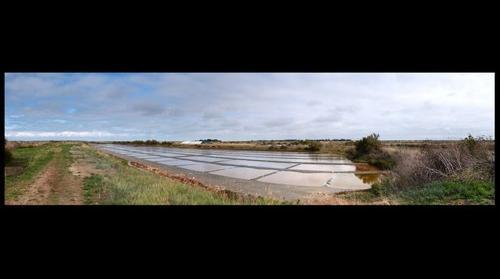 Ars en Ré, les marais salant