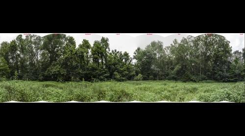 Ozark wetland -- Summer