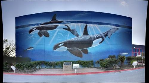 Killer Whale Mural, SPI Convention Center