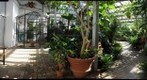 Dow Gardens - The Conservatory Pt. 1 - Midland, Michigan