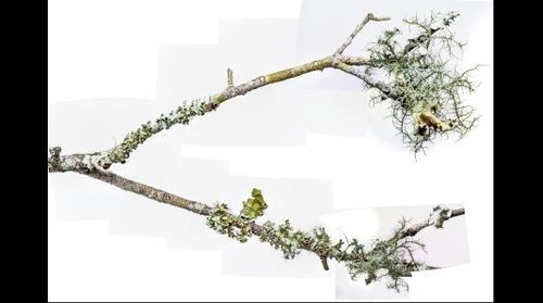 lichens 13-sept 2015