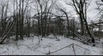 Abandoned roller coaster in the woods