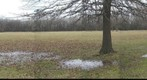 Forest Preserve Test Panorama