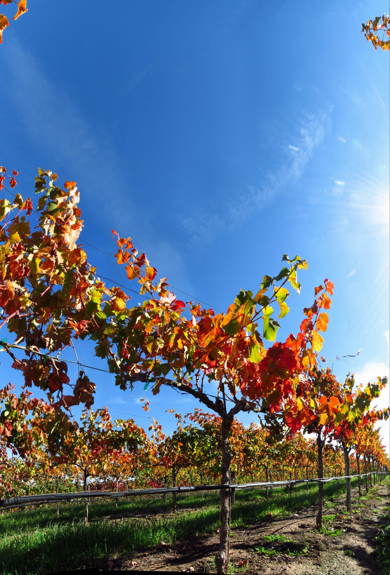 Vines & Sky
