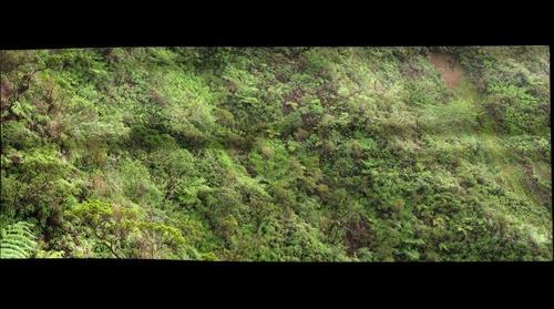 Control site Poamoho Angeve control