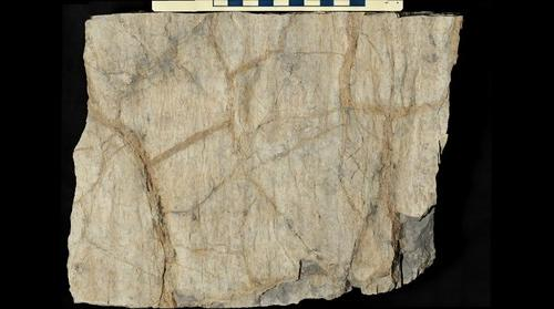 Dessication cracks in the Silurian Tonoloway Formation