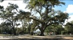 Oak trees at the Audubon Zoo, New Orleans