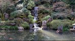 Koi pond in March