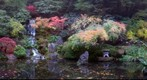 Koi pond in November