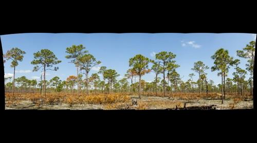 JD Flatwoods Fire Recovery (9 days after burn)