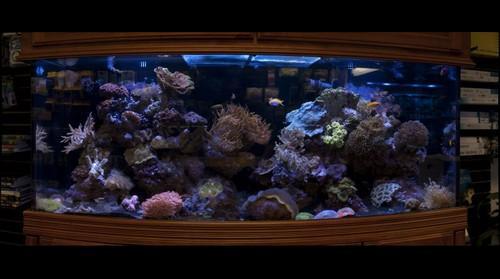 2009-03-08 Aquamart Tank 2