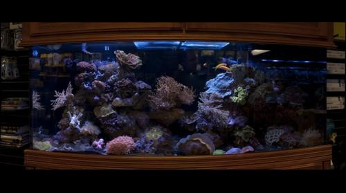 2009-03-08 Aquamart Tank 2-2