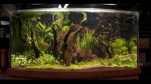 2009-03-08 Aquamart Tank 3