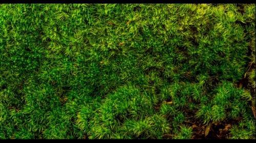 [ GigaPixel Moss ]
