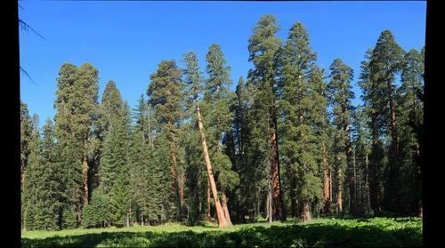 Round Meadow Giant Sequoia Grove