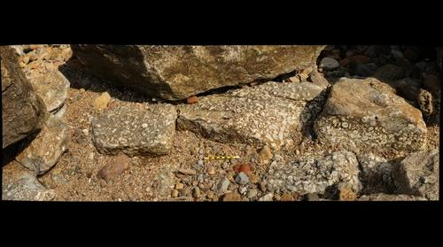 """Dunbar Marble"": Mississippian limestone chock full of rugose corals"