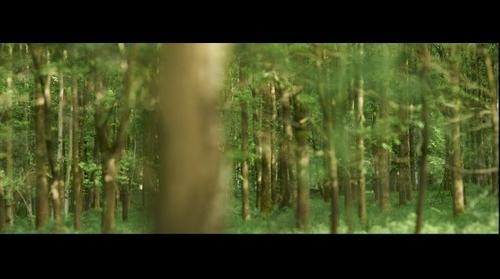 Chevreuil forêt H