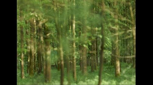 Chevreuil Forêt Cut