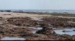 090308 coal oil point mussel beach green grass and low tides autostitch