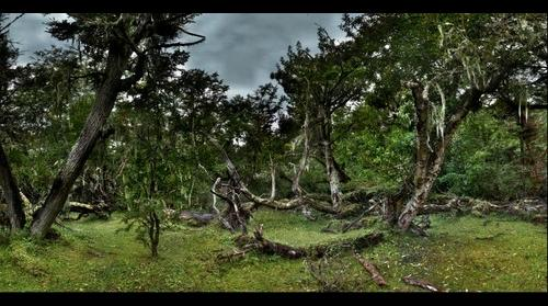 Omora Ethnobotanical Preserve, Forest