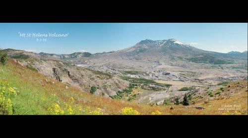Mt St Helens Volcano and flowers Landscape