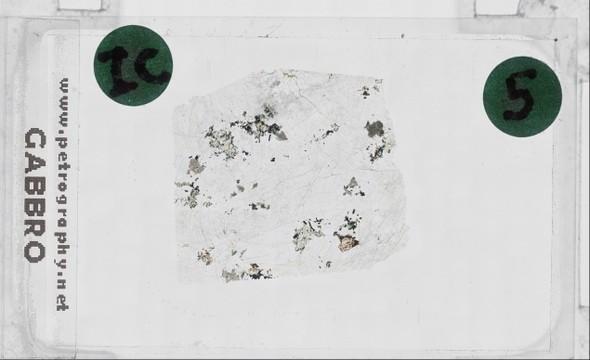 Olivine in Gabbro, Plane Polars