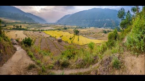 Fields at Yambesa Punakha