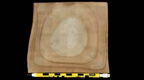Liesegang rings in jointed sandstone, Foreknobs Formation, Corridor H, West Virginia.
