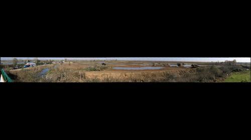 Selkeh Wildlife Refuge in Anzali Wetland, Iran (27th Nov, 2015)