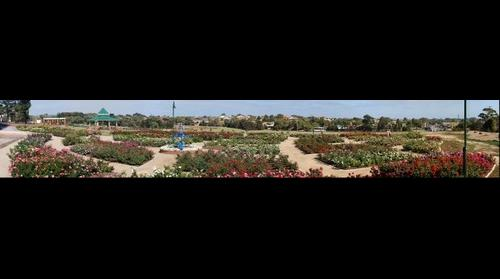 Mornington Rose Garden