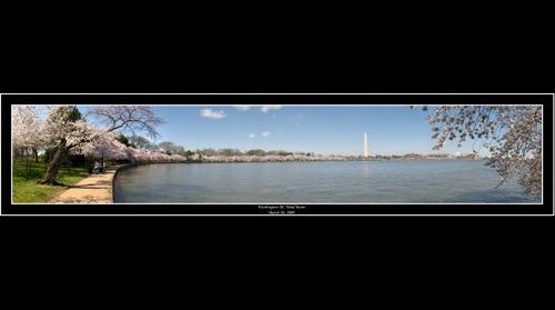 Washington DC Tidal Basin Cherry Blossoms