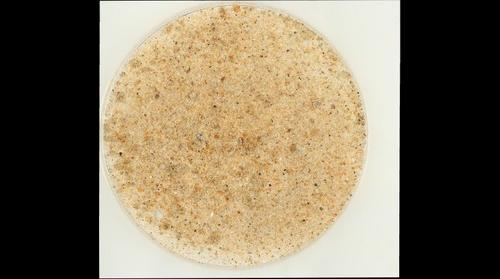 Sand from Ocean City, Maryland