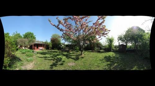 Garten + Kirschbaum / Garden + Cherry tree