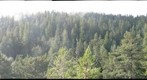 view of old-growth redwood forest canopy from 330 feet into the sun through mist, Humboldt Redwoods State Park