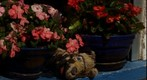 nature morte, fleurs et peluche a mon chien. still life, flowers and fuzz has my dog at France le Cap d'Agde