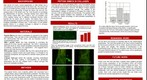 whereRU: Aresty Poster 33- PSA and HNK-1 in Collagen Hydrogel to Promote Spinal Cord Regeneration
