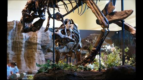 T. rex vs. T. rex, Carnegie Museum of Natural History Dinosaurs in Their Time
