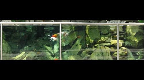 Phipps Conservatory, Koi tank