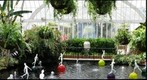 Water Garden at Phipps Conservatory