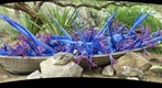 Phoenix, AZ - Desert Botanical Garden Chihuly Exhibit: &#39;Blue and Purple Boat&#39;