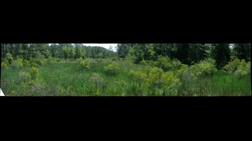 Jamestown Swamp Lands