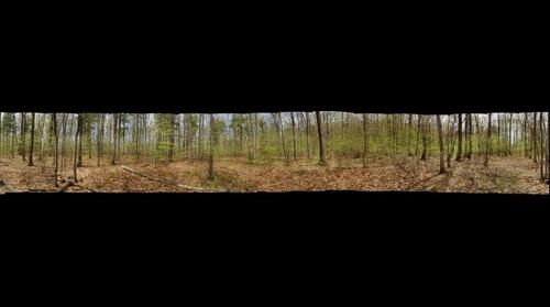 Salisbury Town Forest Mesic Oak Forest