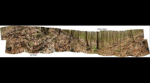 Salisbury Town Forest Escarpment Forest