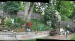 Backyard-June12