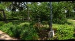 Houston, Texas: Japanese Garden in Hermann Park - Gentle Peace In the Midst of Chaos 4/5 - a 360 Panorama