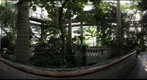 The Jungle Room of the National Botanic Gardens, Washington DC