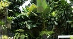 My Garden , First test Gigapan