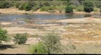 Elephant crossing the Elephants river, through hippo infested water, in the Kruger National Park, South Africa (KPSERIES NO3)