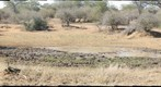 Can you spot the lions? Lions waiting for  prey in the Kruger National Park, South Africa (KPSERIES NO4) Featured on National Geographic..